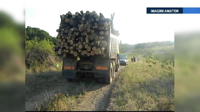 Pedeapsa pe care ar putea sa o primeasca persoanele care transporta lemne furate