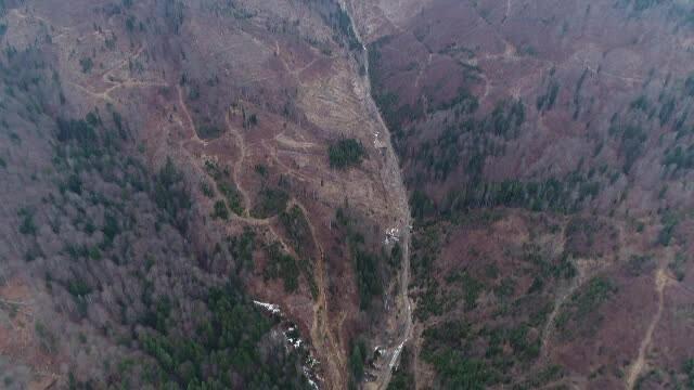 200 de oameni de stiinta cer masuri urgente pentru protejarea padurilor din Romania. Imagini revoltatoare, filmate din drona
