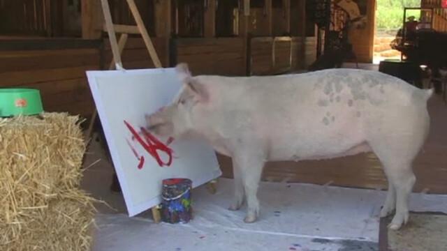 porc pictura