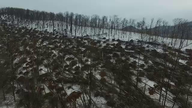 Dezastru provocat de ploaia înghețată: o pădure uriașă a fost pusă la pământ