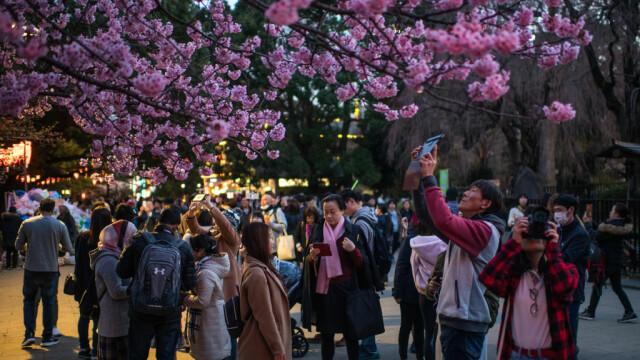 Oamenii fotografiază cireșii înfloriți într-un parc din Tokyo