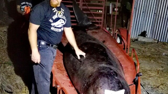 Ce se afla în stomacul unei balene găsită moartă pe o plajă din Filipine. FOTO - Imaginea 2