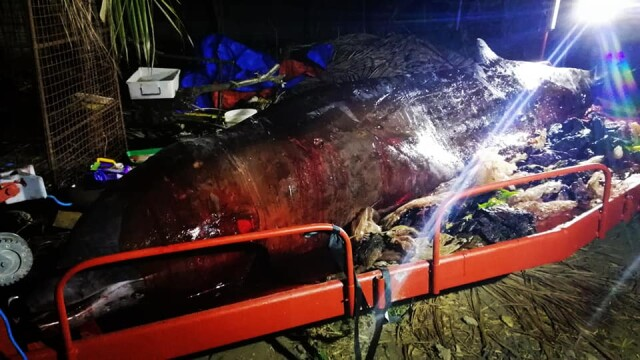 Ce se afla în stomacul unei balene găsită moartă pe o plajă din Filipine. FOTO - Imaginea 6
