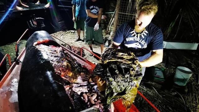 Ce se afla în stomacul unei balene găsită moartă pe o plajă din Filipine. FOTO - Imaginea 9