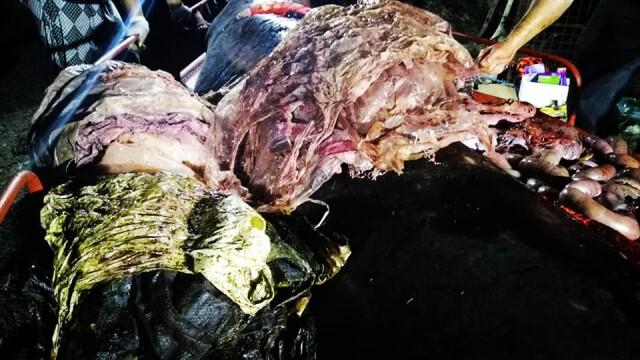 Ce se afla în stomacul unei balene găsită moartă pe o plajă din Filipine. FOTO - Imaginea 10