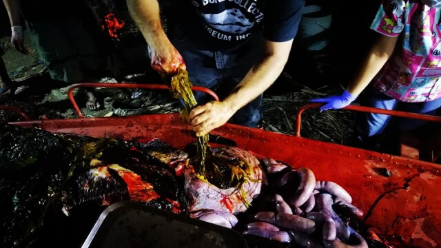 Ce se afla în stomacul unei balene găsită moartă pe o plajă din Filipine. FOTO - Imaginea 11