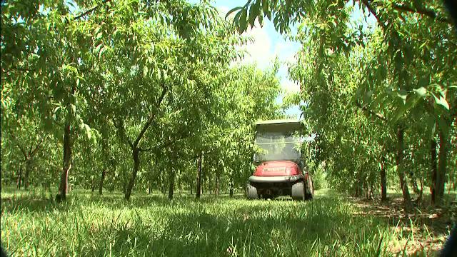 România are cu 70% mai puține livezi decât în 1990. Ce spun fermierii