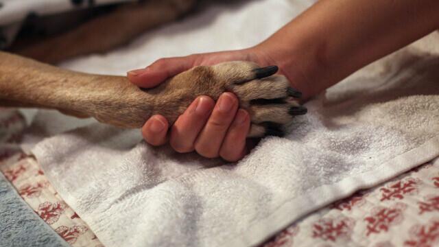 Descoperire șocană în Bacău: Zeci de câini morți, la un adăpost canin. Unii au fost băgați vii în saci și lăsați să se sufoce