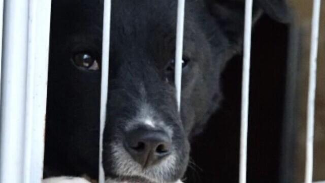 Poliția animalelor salvează necuvântătoarele, dar nu are unde să le cazeze. Lipsesc adăposturile pentru animalele mari