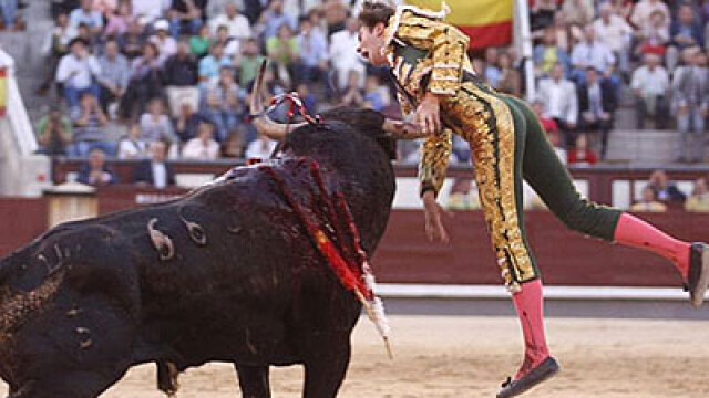 Teroare in ring: matador strapuns in piept de un taur!
