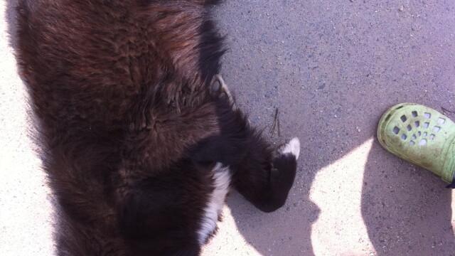 FOTO. Cruzime maxima in Ilfov. Zeci de caini, otraviti la marginea padurii - Imaginea 6