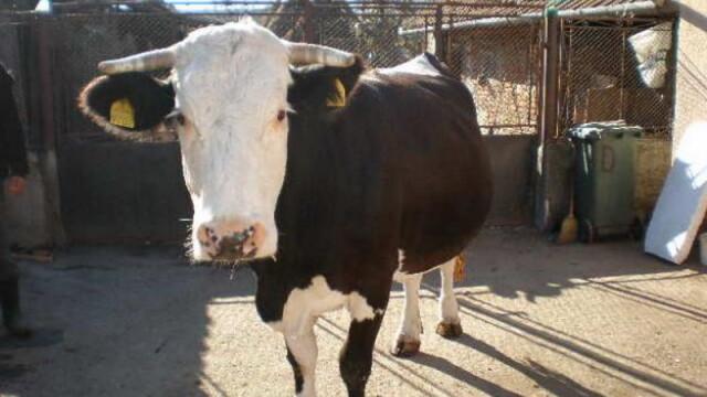 MADR: Nu exista nicio alerta care sa implice Romania in cazul laptelui din Serbia contaminat