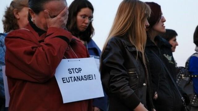 Legea privind eutanasierea maidanezilor, adoptata pe articole. Votul final se da saptamana viitoare