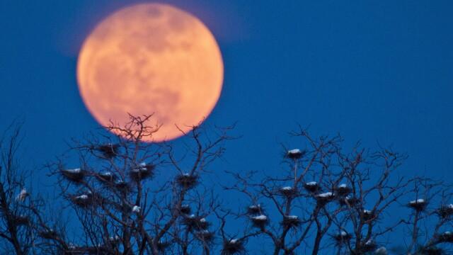 Super-luna in imagini. Cele mai spectaculoase fotografii realizate in momentul de apropiere maxima - Imaginea 7