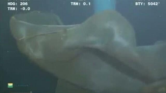 Descoperire la 5200 de metri adancime. O camera a unui submarin a surprins un monstru marin. VIDEO - Imaginea 5