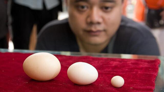 Cum arata cel mai mic ou de pe Planeta. E mic cat o moneda si cantareste aproape 3 grame - Imaginea 5