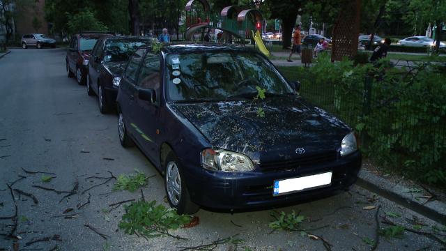 O masina parcata in zona centrala a Timisoarei a fost avariata de un stejar care a cedat. FOTO