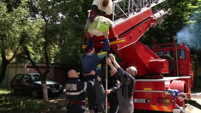 Vecinele cu ac, nedorite. Un roi de albine a creat panica printre locatarii unui bloc din Timisoara - Imaginea 3