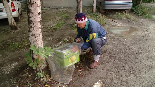 Vecinele cu ac, nedorite. Un roi de albine a creat panica printre locatarii unui bloc din Timisoara - Imaginea 4