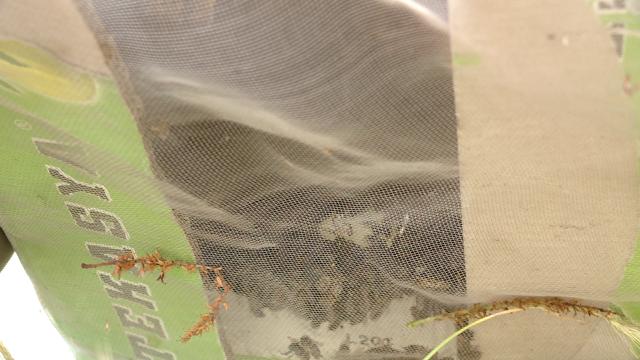 Vecinele cu ac, nedorite. Un roi de albine a creat panica printre locatarii unui bloc din Timisoara - Imaginea 5