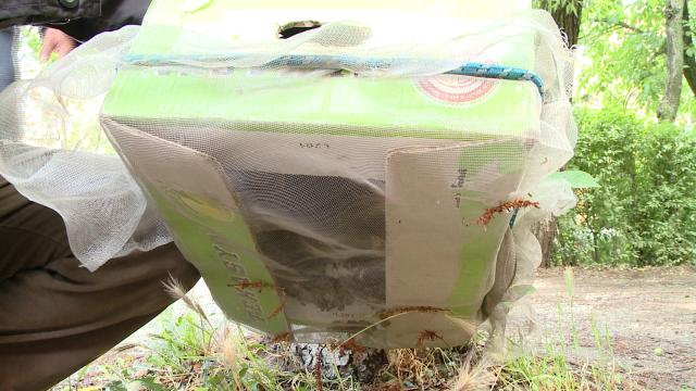 Vecinele cu ac, nedorite. Un roi de albine a creat panica printre locatarii unui bloc din Timisoara - Imaginea 6