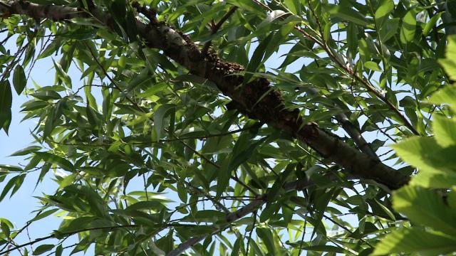 Vecinele cu ac, nedorite. Un roi de albine a creat panica printre locatarii unui bloc din Timisoara - Imaginea 7