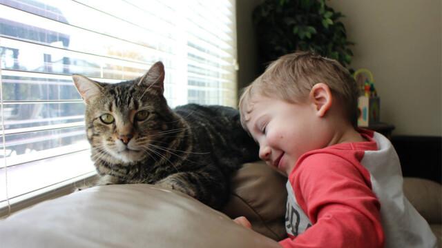Ce se va intampla cu pisicuta care a salvat un copil atacat de caine. \