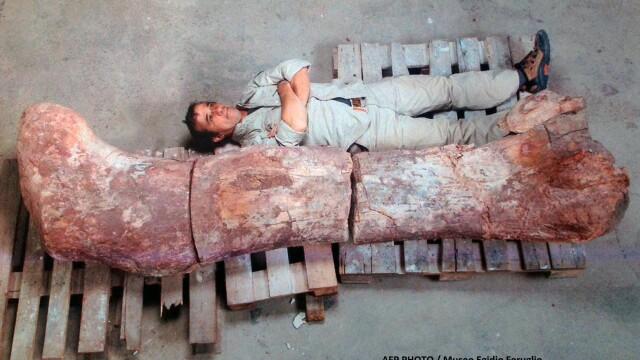Galerie foto.Cel mai mare dinozaur descoperit vreodata are 40 de metri lungime.Scheletul sau a fost gasit recent in Argentina - Imaginea 1