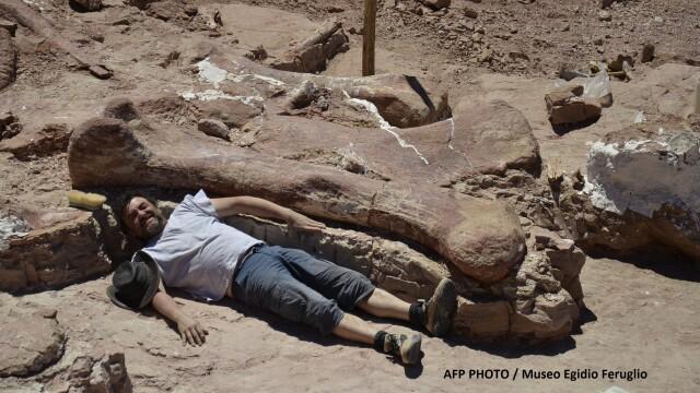 Galerie foto.Cel mai mare dinozaur descoperit vreodata are 40 de metri lungime.Scheletul sau a fost gasit recent in Argentina - Imaginea 2