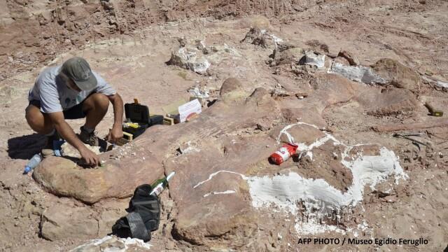 Galerie foto.Cel mai mare dinozaur descoperit vreodata are 40 de metri lungime.Scheletul sau a fost gasit recent in Argentina - Imaginea 4