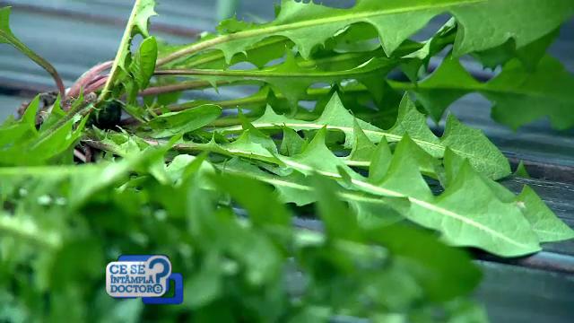 Clorofila ajuta la eliminarea toxinelor din organism si combate excesul de sare. Cum sa preparam si pastram plantele verzi