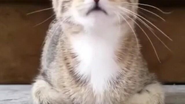 Momentul hilar care arata ca si pisicile, nu doar oamenii, sunt speriate de filmul de groaza Psycho. Reactiile lui Togepi - Imaginea 1