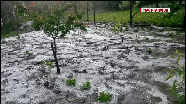 Agricultorii vor despagubiri de la stat, dupa ce vijeliile le-au distrus primele recolte. Cum putea fi evitat dezastrul