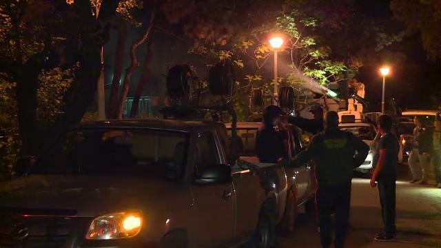 Primaria Capitalei a declarat razboi capuselor. Peste 3.700 de litri de insecticid au fost raspanditi in Parcul Tineretului
