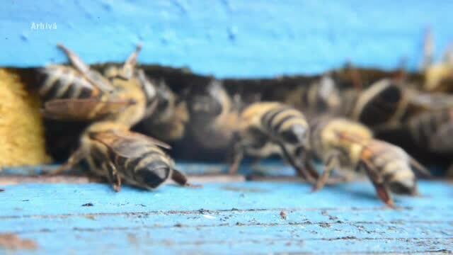 Dosar penal de ucidere din culpă după ce doi bărbaţi au murit înţepaţi de albine, în Buzău