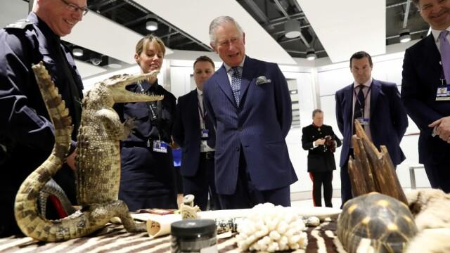 50 de crocodili, descoperiți de vameșii din aeroportul Heathrow. Unde erau ascunși
