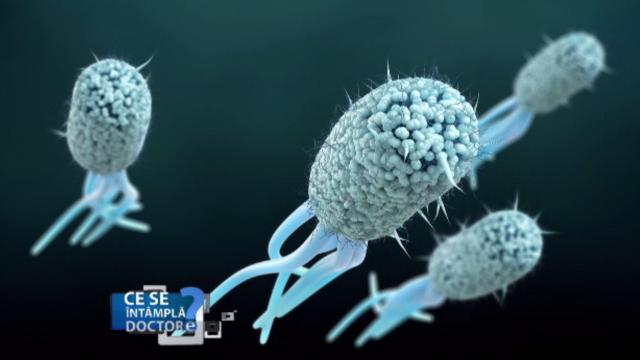 Infecțiile urinare repetate pot avea drept cauză bacteria E-coli