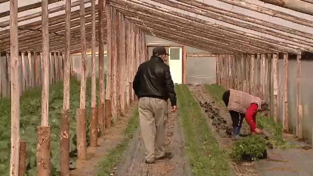 Apele Oltului distrug, zi de zi, grădinile unor agricultori din Covasna - Imaginea 2