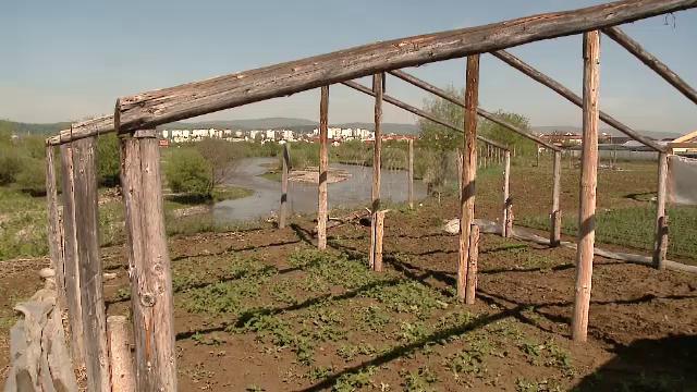 Apele Oltului distrug, zi de zi, grădinile unor agricultori din Covasna - Imaginea 3