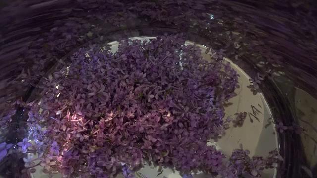 Socata și dulceața de liliac, delicatese din Apuseni apreciate de străini - Imaginea 2