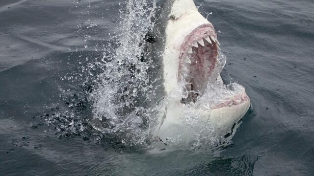"""Panică pe o plajă. Un rechin uriaș și-a făcut apariția printre turiști: """"Doamne, Dumnezeule, se duce spre femeia aia"""""""