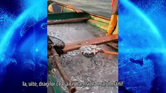 Afaceri în pandemie. Pește proaspăt din Marea Neagră, direct la tine acasă