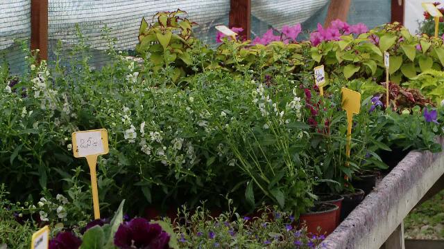 Grădină amenajată
