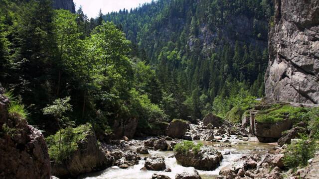 Dosare penale după dezastrul ecologic de pe râul Bicaz. O păstrăvărie, anchetată după ce a vândut pește otrăvit