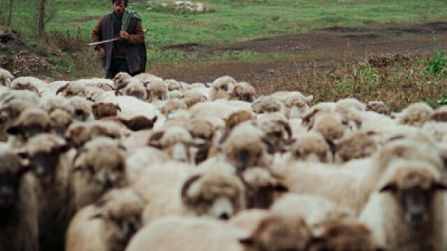 Moarte inexplicabila a unui cioban din Timis