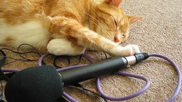 pisica si microfonul