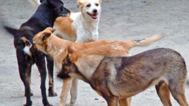 A fost prins cainele din Dambovita care a muscat de fata si de cap un baietel de 3 ani