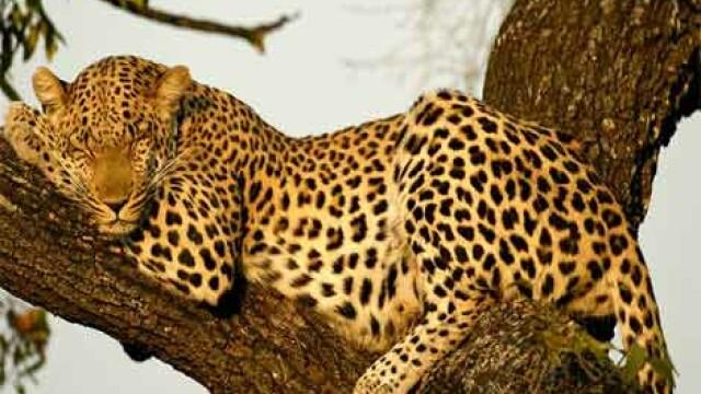 Locul unde nu ai voie sa porti haine care imita leopardul. De ce a fost luata aceasta decizie