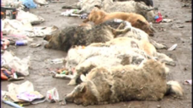 Cainii gasiti morti printre blocuri