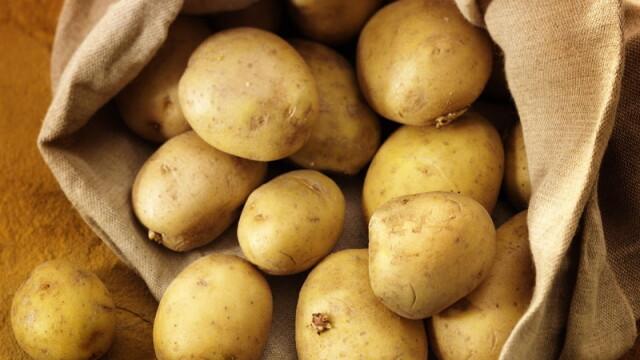 Uniunea Europeana a aprobat cultivarea cartofilor modificati genetic